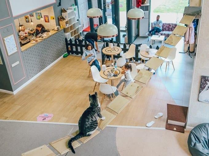 MIKI PIKI CAT CAFE astana